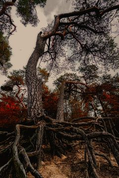 verfluchter Baum von C mansveld