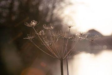 Winterglühen von Ingrid de Vos - Boom
