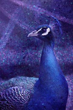 Pfau blau von Johannes Schotanus