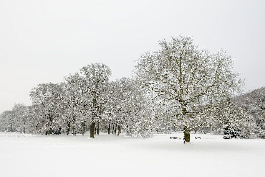 Park in de winter
