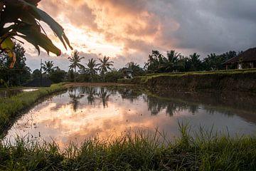 Zonsondergang rijstvelden van Ilona Duba