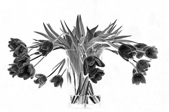 zwarte tulpen van marjolein Parijs