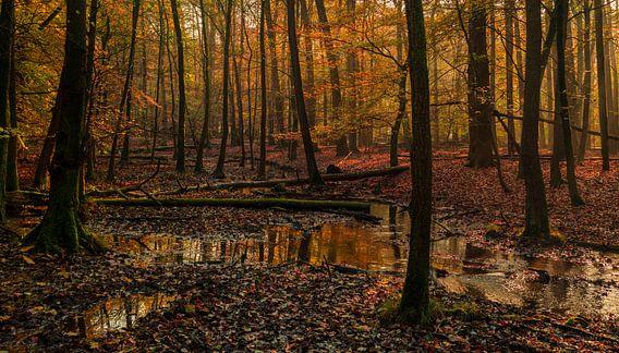 Luvenumsus Silva van Joris Pannemans - Loris Photography