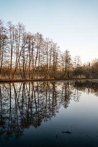Les arbres au soleil du matin - réflexion de l'eau