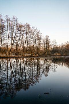 Bomen in de ochtendzon - water reflectie van Wianda Bongen