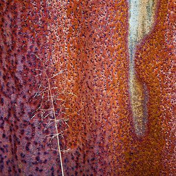 Oergrond - Studie in rood van Hans Kwaspen
