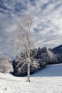 Winters stilleven, een serene wereld. van Jani Moerlands