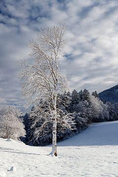 Winters stilleven, een serene wereld. von Jani Moerlands