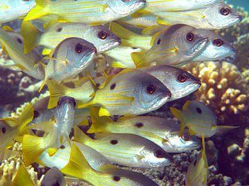 Fischsitzung von Roel Beurskens