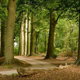 Sommerwald von Frans Blok