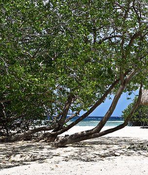 Mangle Halto Strand, Aruba von