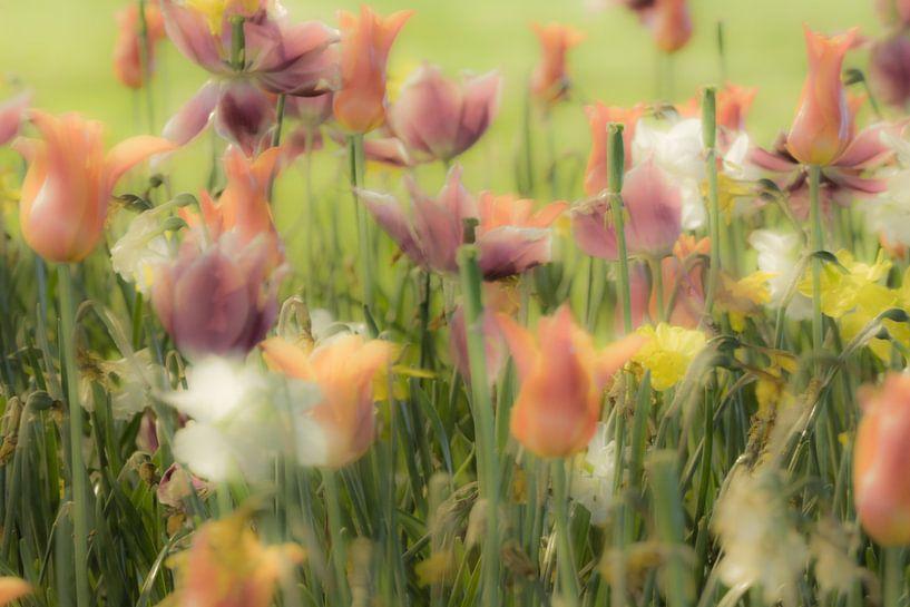 Tulpen van Dennis Van Den Elzen