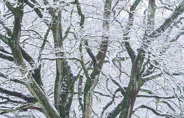 Wit en Groen van Joris Pannemans - Loris Photography