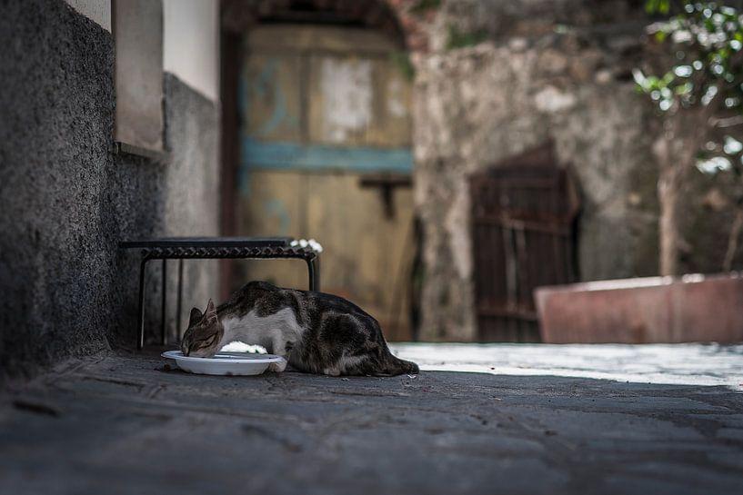 Poes drinkt uit waterbak in dorp in italie sicilie fotoposter of  wanddecoratie van Edwin Hunter