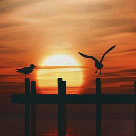 Meeuwen bij zonsondergang 5 van Jan Keteleer