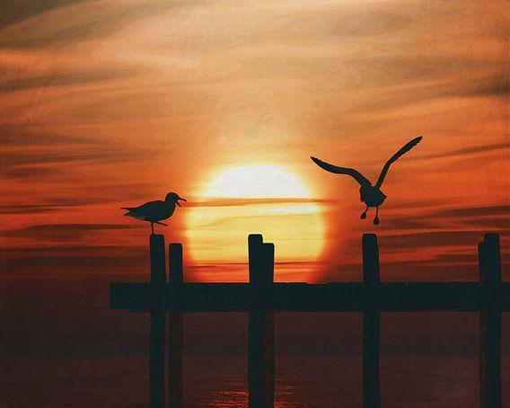 Meeuwen bij zonsondergang 5