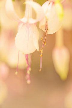 Fuchsia in zachte tinten van Roosmarijn Bruijns