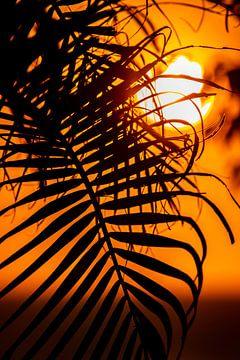 Palm blad in ondergaande zon van Five elements media
