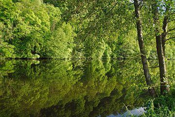 Baumreihe über und unter Wasser von wil spijker