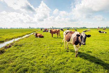 Kühe in einer niederländischen Polderlandschaft von Ruud Morijn