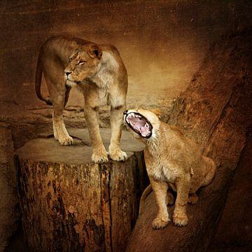 Löwenfamilie von Heike Hultsch