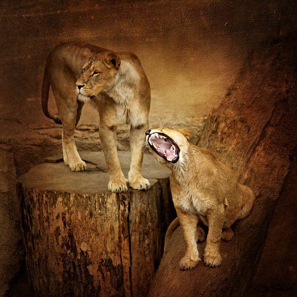 Löwenfamilie van Heike Hultsch
