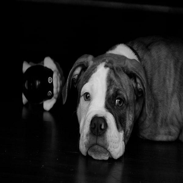 Hund mit Spielzeug von sarp demirel