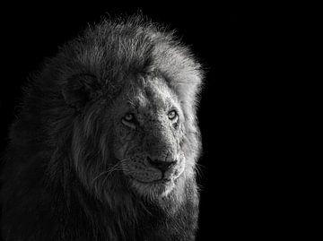 Portret van Simba, James Cai van 1x