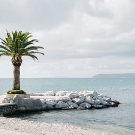 Palm boom van Lorena Cirstea