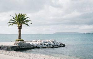 Palm boom