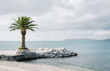Palme von Lorena Cirstea