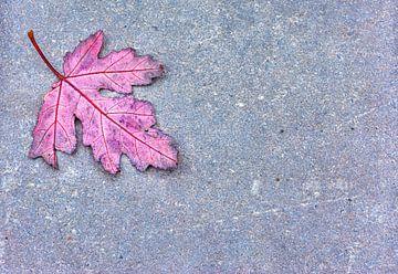 Herbstblatt  von Sigrid Klop