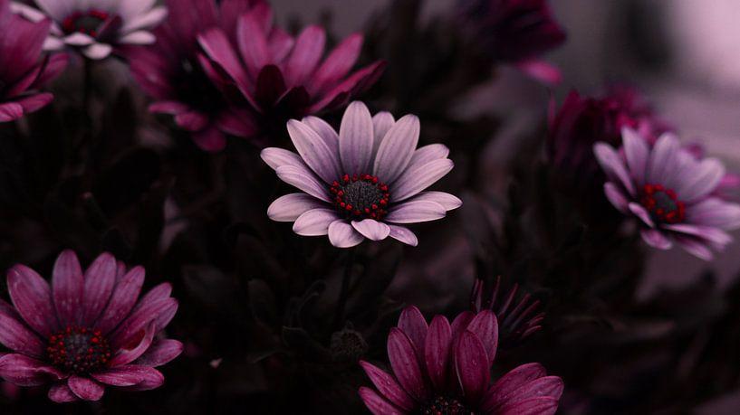 Bloemen von Maurice Cobben