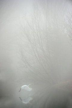 Grote zilverreiger in de mist sur