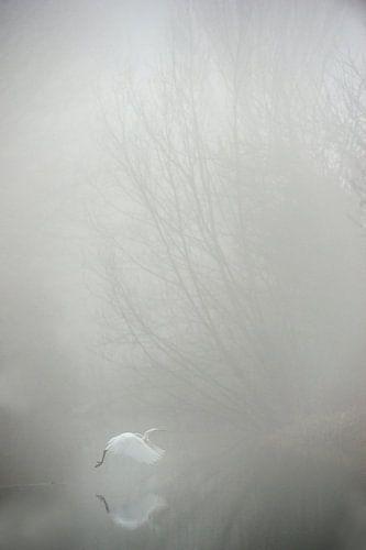 Grote zilverreiger in de mist