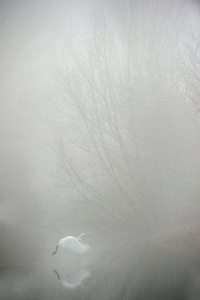 Grote zilverreiger in de mist van Erik van Velden