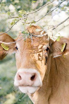 Limousin koe portret in de natuur | Dierenfotografie wall art van Milou van Ham