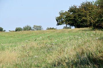 Pasture van Marcel Ethner