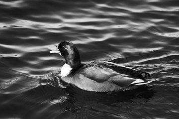 Ente im Wasser von Marion Hesseling