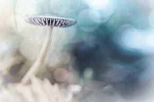 Dreamy Mushroom