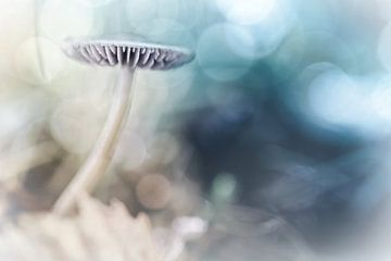 Verträumte Pilz von Bob Daalder