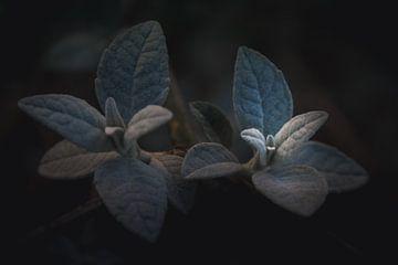 Singende Blätter von Sandra Hazes