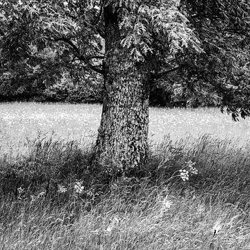Zomer boom van Carla Vermeend