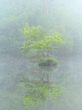 Eilandje in de mist aan de Oisterwijkse vennen. van Jos Pannekoek