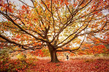 herfst van Bertrik Hakvoort