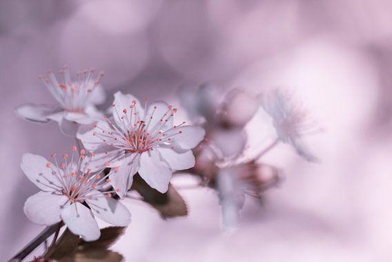 Bloesem in  het roze