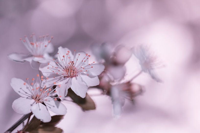 Bloesem in  het roze van Marianne Twijnstra-Gerrits