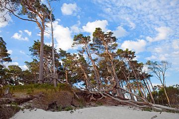 Ostsee: Darß - Weststrand von t.ART
