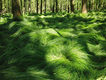 Drunk grasses sur Titia Buren