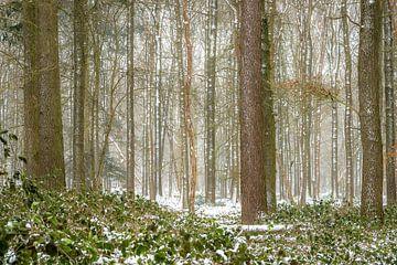 Neuschnee im Wald von Eelke Brandsma
